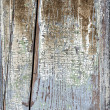 Stock Photo: Old painted distressed wood background