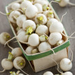 Basket of small turnips — Stock Photo