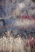 Dry grasses and bare trees in winter forest — Stock Photo