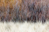 Blurred brown winter woodland background — Stock Photo