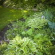Shady garden with perennials — Stock Photo