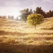 Rural landscape with single tree — Stock Photo #43172867