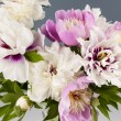 Peony flower bouquet — Stock Photo