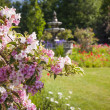 June garden with blooming weigela — Stock Photo #43173753