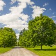 Rural landscape with maple trees — Stock Photo
