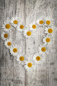 Daisy heart — Stock Photo