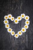 Daisy heart on dark wood — Stock Photo
