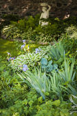 Shady garden with perennials — Foto Stock