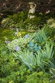 Shady garden with perennials — Stock Photo
