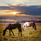 Horses grazing at sunset — Stok fotoğraf
