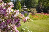 June garden with blooming weigela — Stock Photo