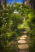 Summer garden and path — Stock Photo