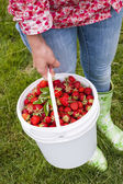 Woman holding fresh strawberries — Stock Photo