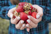 Hands holding fresh strawberries — Stock Photo