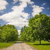 Rurale landschap met maple bomen — Stockfoto