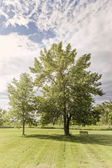 Trees in park — Stock Photo