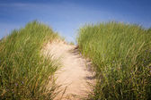 Path over sand dunes with grass — Stock Photo