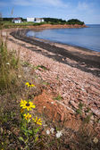 Prince Edward Island coastline — Stock Photo