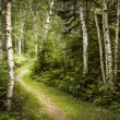 Path in green summer forest — Stock Photo #45303467