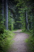 Path in dark moody forest — Stock Photo