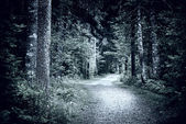 Path in dark night forest — Stock Photo