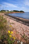 Prince edward island kusten — Stockfoto