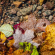 Fall leaves in water — Stock Photo #47375373