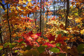 Autumn splendor — Stock Photo