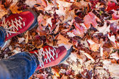 Red shoes standing among fall leaves — Stock Photo
