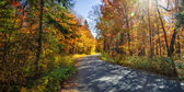 Road in fall forest — Stock Photo