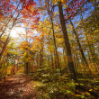 Hiking trail in sunny fall forest — Stock Photo #48823933