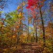 Hiking trail in sunny fall forest — Stock Photo #48823945