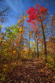 Hiking trail in sunny fall forest — Stock Photo