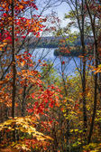 Lake and fall forest — Stock Photo