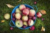 Fresh apples harvest — Stock Photo