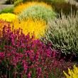 Colorful garden flowers — Stockfoto #6696617