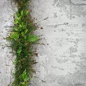 Urban nature — Stock Photo