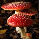Toadstool mushroom — Stock Photo #13345378