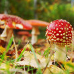 Toadstool mushroom — Stock Photo #13345384