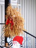 Oat wheat in a bunch, birds food — Stock Photo