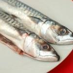 Raw mackerel fish — Stock Photo #27168801