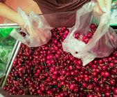 Prunus avium — Stock Photo