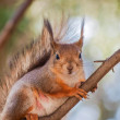 Stock Photo: Squirrel on branch