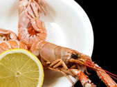 Langoustine — Stock Photo