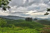 Tea Estate of Munnar-India — Stock Photo