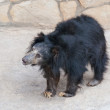 Sloth bear cub — Stock Photo