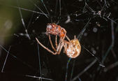 Spider eats an ant — Stock Photo