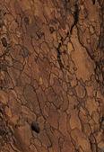 Gold bark texture — Stock Photo