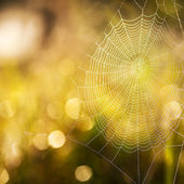 Cobweb summer — Stock Photo