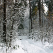 Stock Photo: Beautiful forest in winter